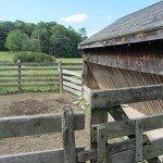 Cattle barn for cattle at the farm.